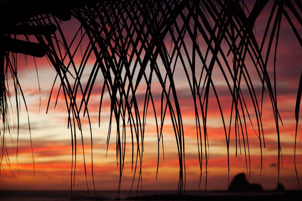 Chasing Peaks: Six Months at Buena Vista Surf Club